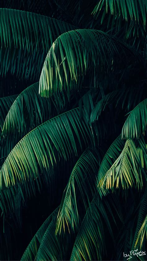 Tropical Jungle 10 tropical jungle iphone x wallpapers preppy wallpapers