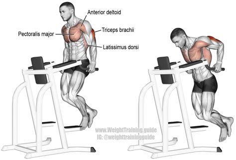 triceps dip exercise and weight