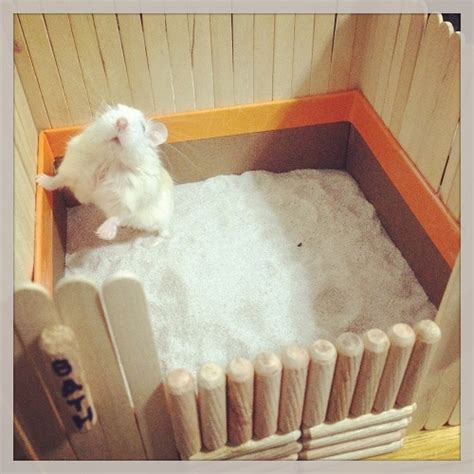 hamster house diy hamster bath house dwarf hamster blog
