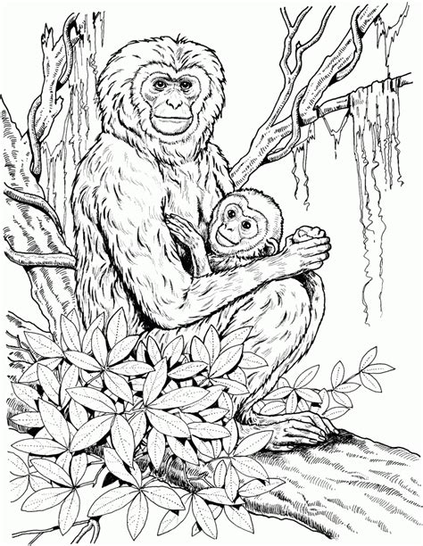 get this monkey coloring pages detailed and realistic for