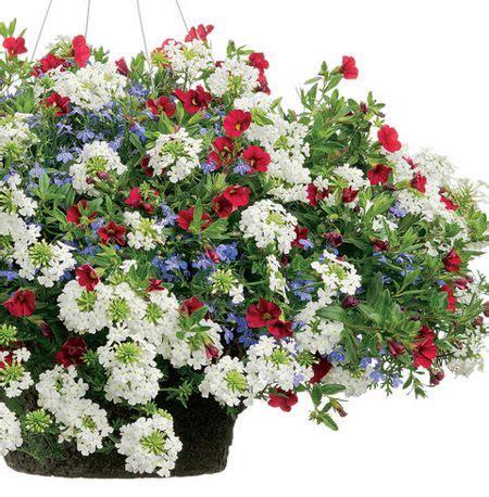 C 0225 Kaos Flowers In 18 best flowering combos images on flowers