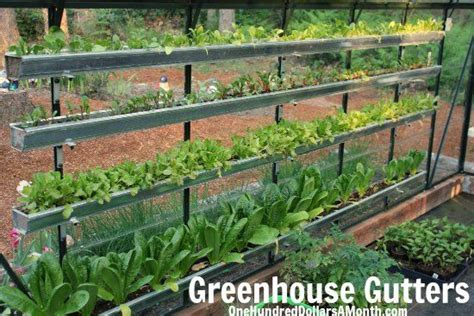 Greenhouse Vegetable Garden How To Grow A Garden In A Green House Greenhouse