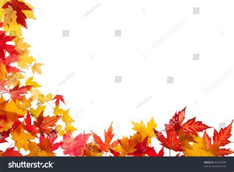 Autumn Leaves On White Background Stock Photo 86753308 Shutterstock Fall Leaves On White Background