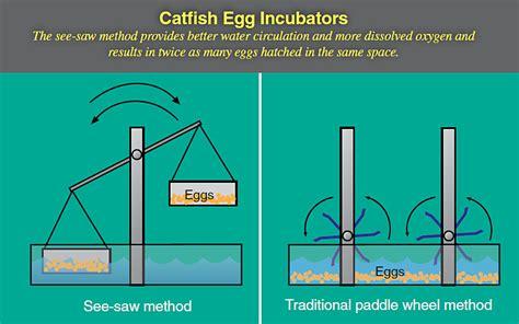 catfish hatchery layout researchers seek new ways to boost catfish production