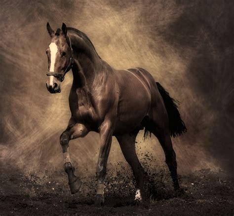 Httpgozando Mujer Y Caballo | caballo que precioso amigo nos dio la naturaleza