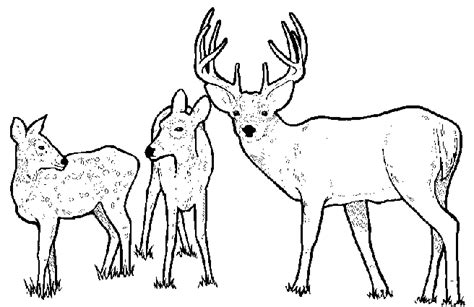 deer family coloring page whitetail deer coloring pages bestofcoloring com