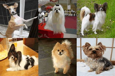 dogs 10 pounds 13 small breeds 10 pounds when fully grown