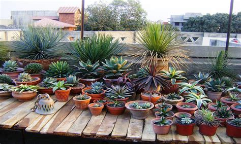 small shade garden ideas cactus and succulent container gardens small shade garden