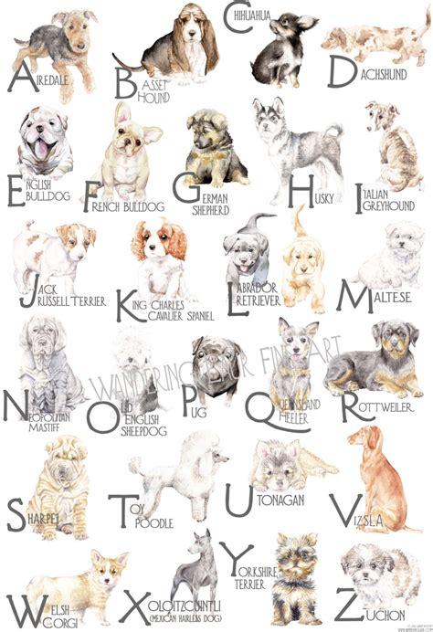 abc puppy abc breed alphabet poster from rogoff milk