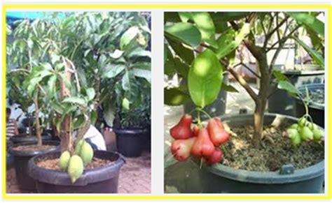 Pupuk Yang Cocok Untuk Bunga buah yang cocok di tanaman dalam pot tanaman bunga hias