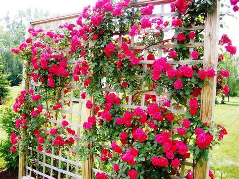 rose trellis plans rose trellis designs i love homes best rose trellis ideas