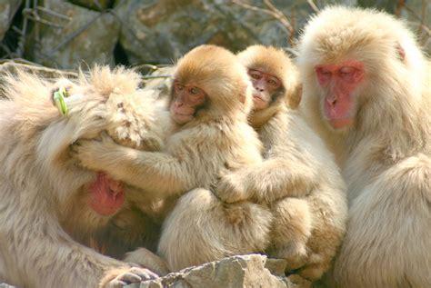 monkey resume