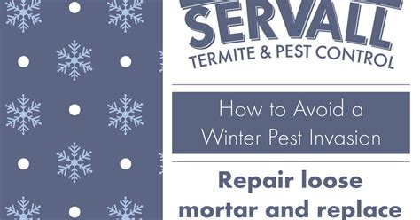 servall pest control don t servall pest control winter pest invasion tips