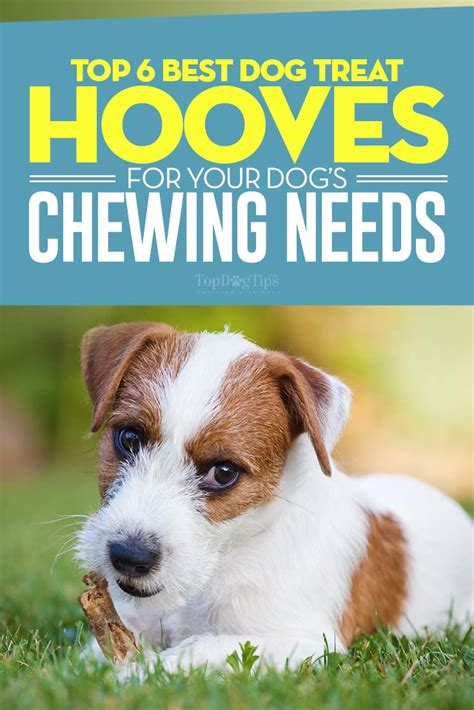 best chew treats for puppies top 6 best treat hooves for chewing in 2017