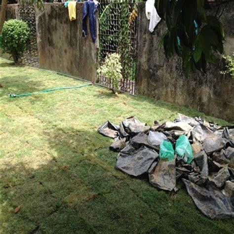Karpet Yg Murah rumput karpet murah rumput padang bersih kawasan rumah