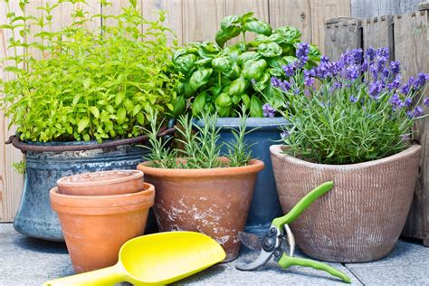 growing herbs indoors   indoor herb garden tips