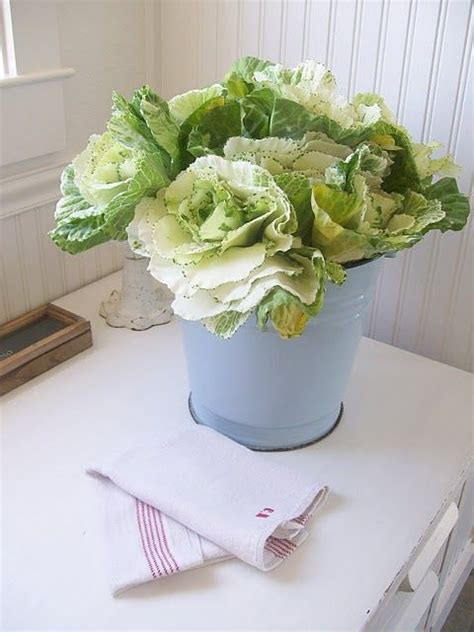 kale broccoli and cabbage replace traditional flowers as love variegated cabbage kale leaves perfect replacement