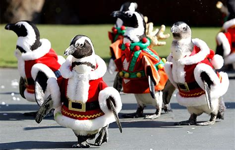 images of christmas penguins march of the christmas penguins slide 13 ny daily news
