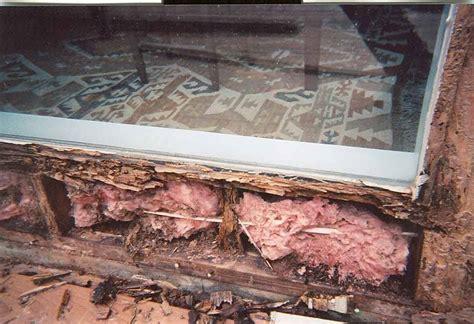 subterranean termites house termites florida environmental