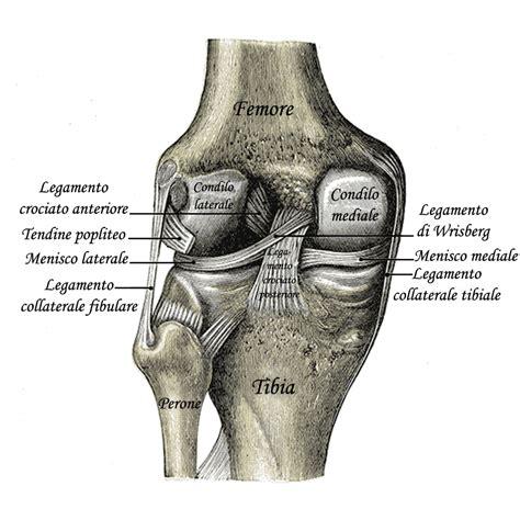 dolori interno ginocchio ginocchio