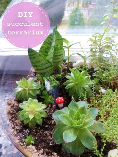 diy succulents diy succulent terrarium terrarium ideas pinterest