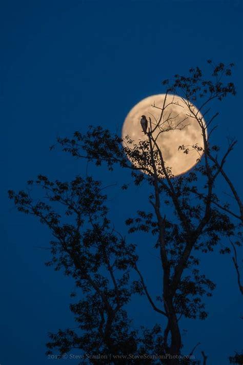 harvest moon see it 2017 s harvest moon astronomy essentials earthsky