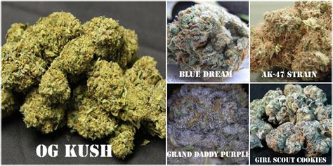 best strain image gallery marijuana strains