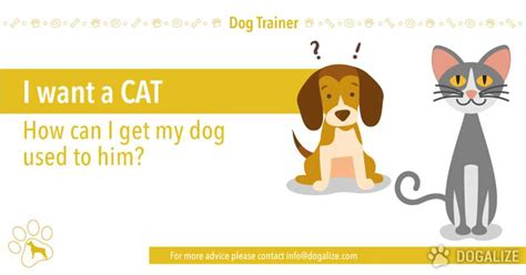 how to get your dog to use the bathroom outside how can i get my dog used to cats dogalize