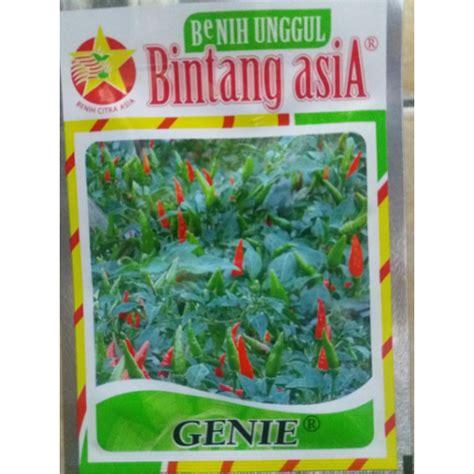Bibit Cabe Rawit jual benih bibit cabe rawit hijau genie bintang asia