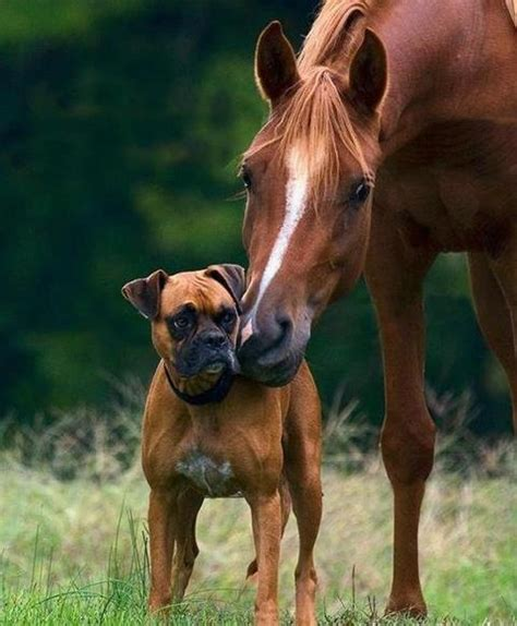 puppies and horses and best friends photos