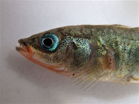 Fish Bio handsome dude fishbio fisheries research monitoring and conservation