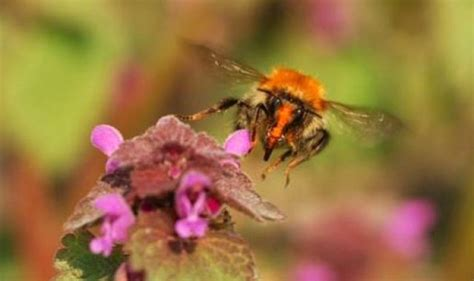 wur bloemen bijen wageningen ur