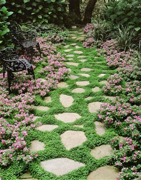 ground cover plants for stone walkways