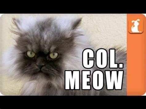 Colonel Meow Memes - caturday goodbye minions internet sensation colonel