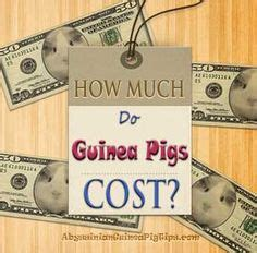 how much does c section cost 1000 ideas about guinea pig run on pinterest guinea