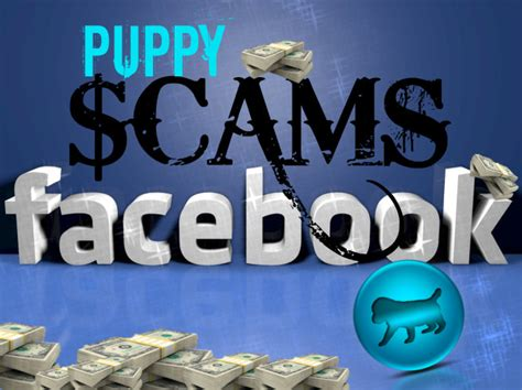 puppy scammer list puppy scams rising