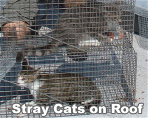 how to get rid of stray cats in your backyard how to get rid of stray feral cats