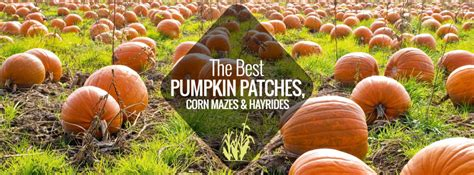 friendly pumpkin patch near me pumpkin patches corn mazes hay rides nashville guru