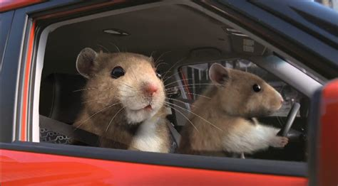 Kia Commercial With Hamsters Image Kia Hamsters Commercial Size 852 X 472 Type