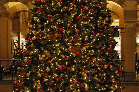 big christmas tree pictures photos and images for