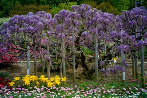 ashikaga flower park ashikaga flower park japan travel tips the passport