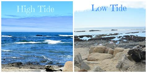 let s go the tide is low books high tide hotelroomsearch net