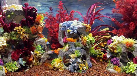 colorful aquarium fish colorful aquarium screensaver hd fish tank