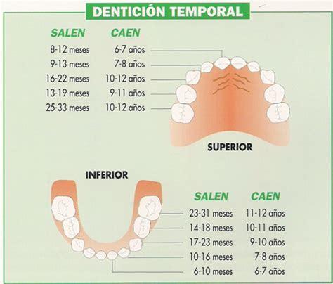 salida de dientes y diarrea irritable 191 ser 225 n los dientes enfermera pediatrica