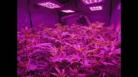 types of grow lights led light design kind led grow light review cannabas led