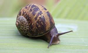 How Do Garden Snails Live by Snail Facts And Information