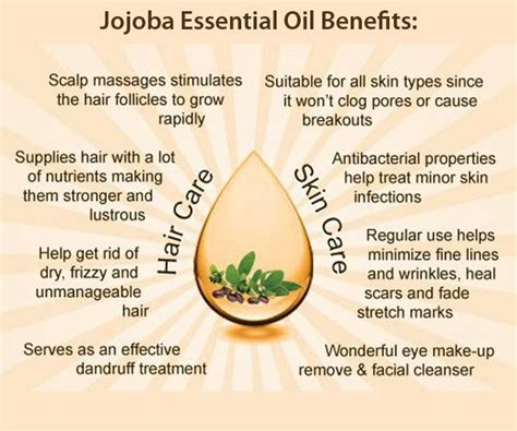 tattoo aftercare jojoba oil jojoba oil a blessing of nature for getting gorgeous skin