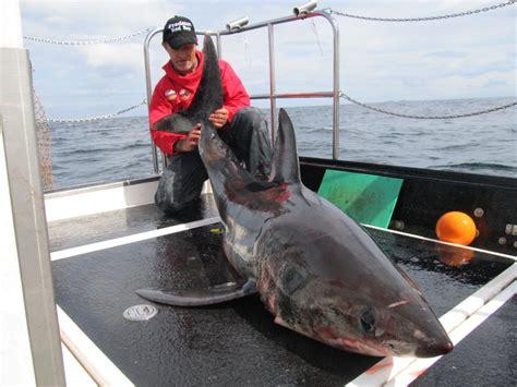 fishing boat attack fish shark attack
