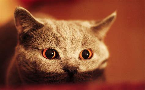 mobile wallpaper cat hd desktop wallpapers 4k hd cats eyes wallpaper hd desktop wallpapers 4k hd