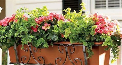 piante per fioriere esterne fioriere vasi
